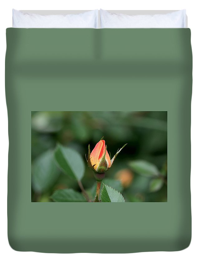 Rose Duvet Cover featuring the photograph Apricot Rose Bud 3 by Kristina Jones