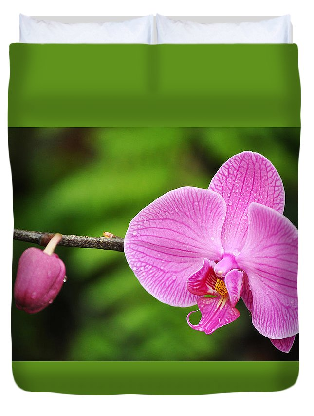 Los Angeles County Arboretum Duvet Cover featuring the photograph Arboretum Tropical House Orchid by Kyle Hanson