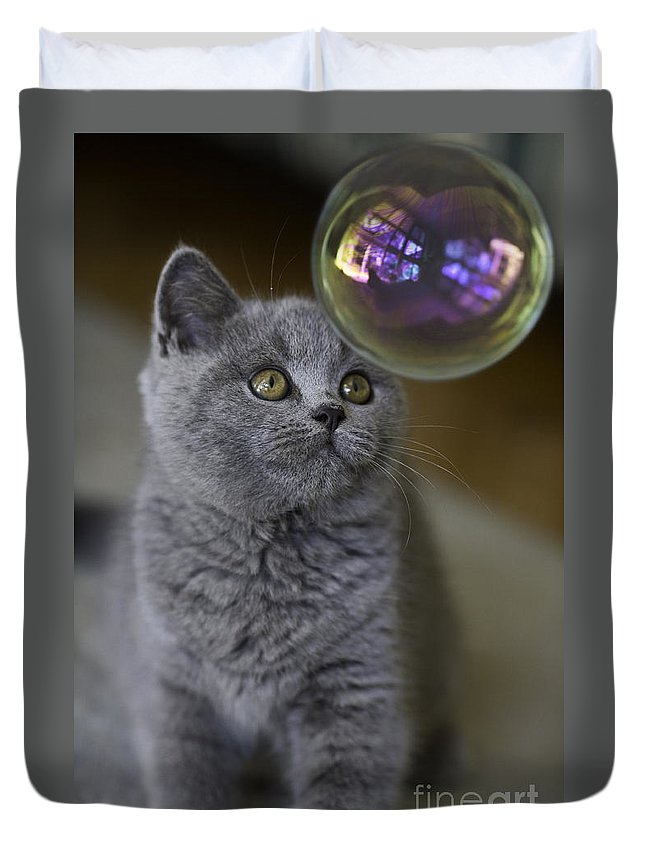 Cat Duvet Cover featuring the photograph Archie With Bubble by Sheila Smart Fine Art Photography
