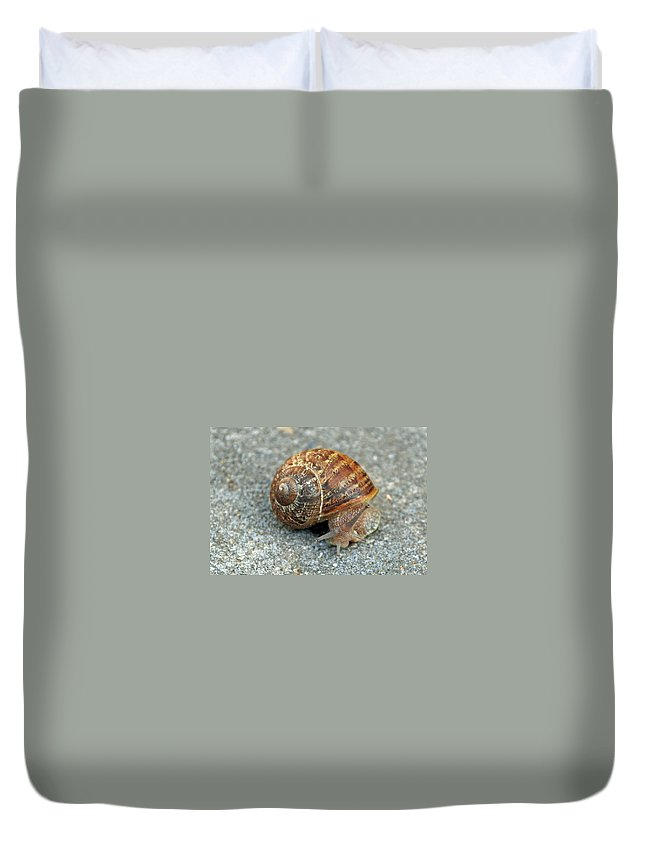 Snail Duvet Cover featuring the photograph Are You Looking At Me by Carol Eliassen