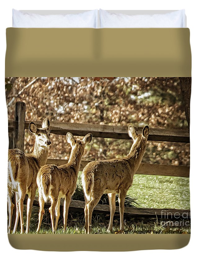Nature Duvet Cover featuring the photograph Are You Looking At Us by Dawn Gari