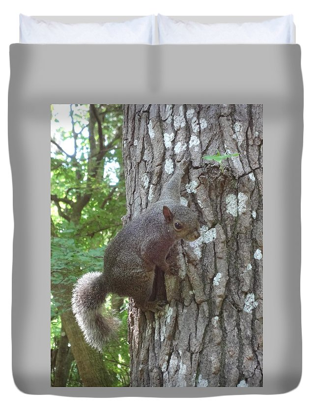 Grey Squirrel Duvet Cover featuring the photograph Are You Talking To Me? by Kim Chernecky