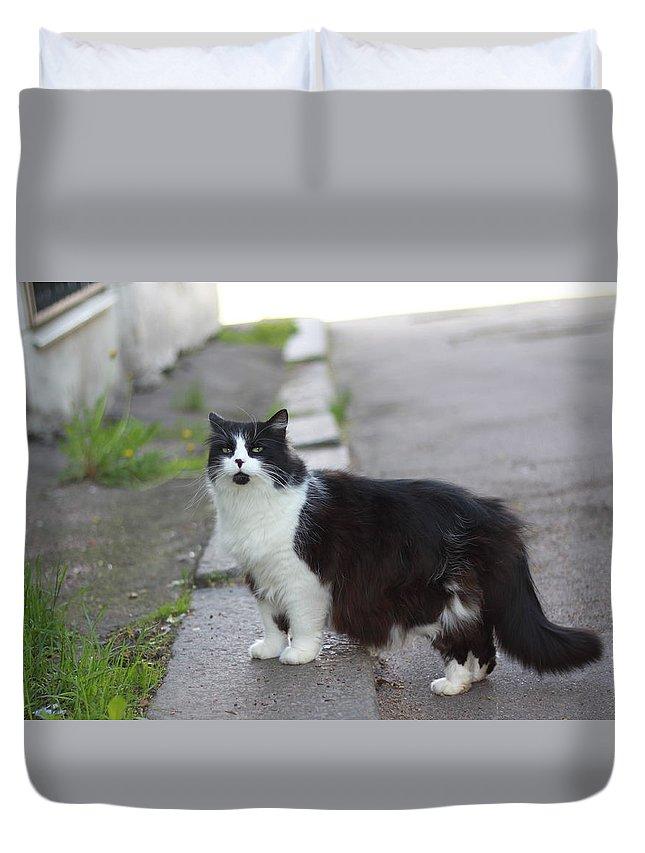 Cat Duvet Cover featuring the photograph Arrogant Cat by Anton Starikov