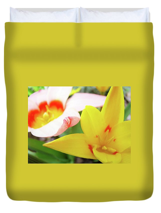 Tulip Duvet Cover featuring the photograph Art Prints Pink Tulip Yellow Tulips Giclee Prints Baslee Troutman by Baslee Troutman