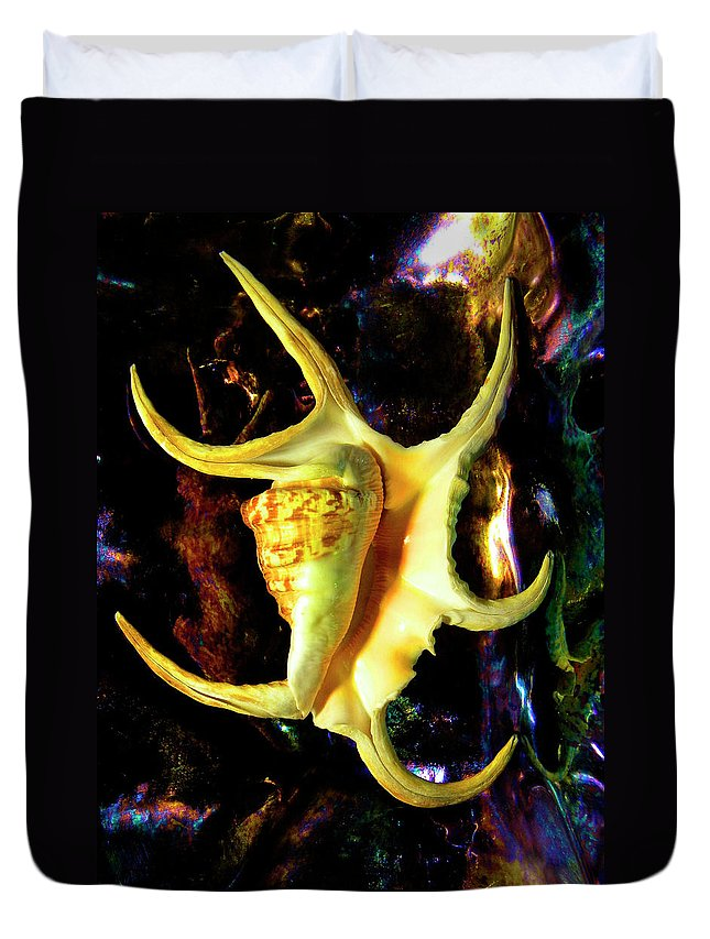 Frank Wilson Duvet Cover featuring the photograph Arthritic Spider Conch Seashell by Frank Wilson