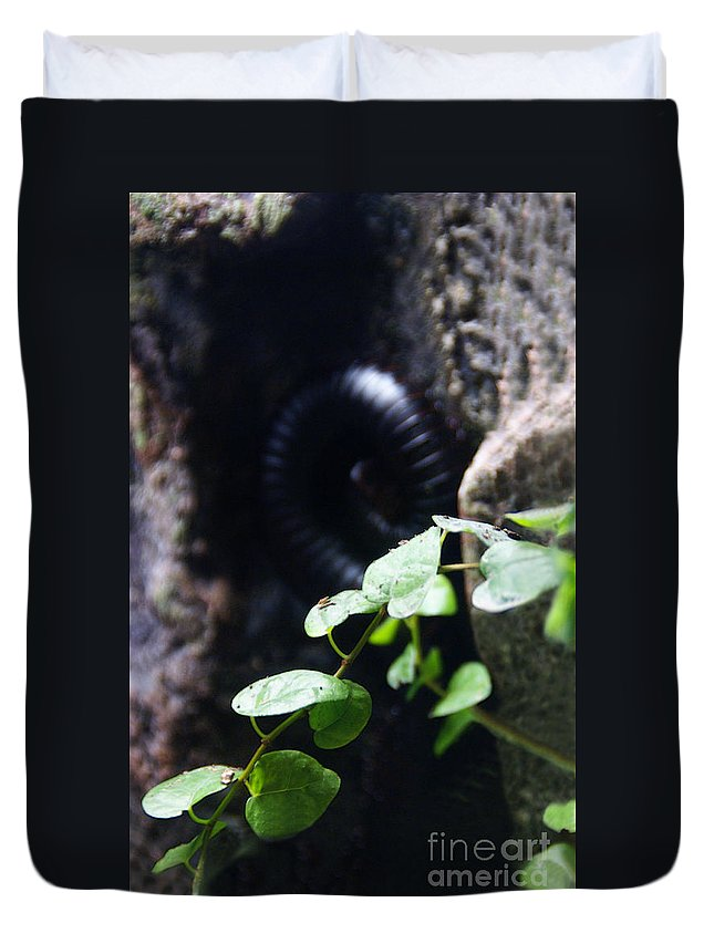Millipede Duvet Cover featuring the photograph Arthropoda by Linda Shafer