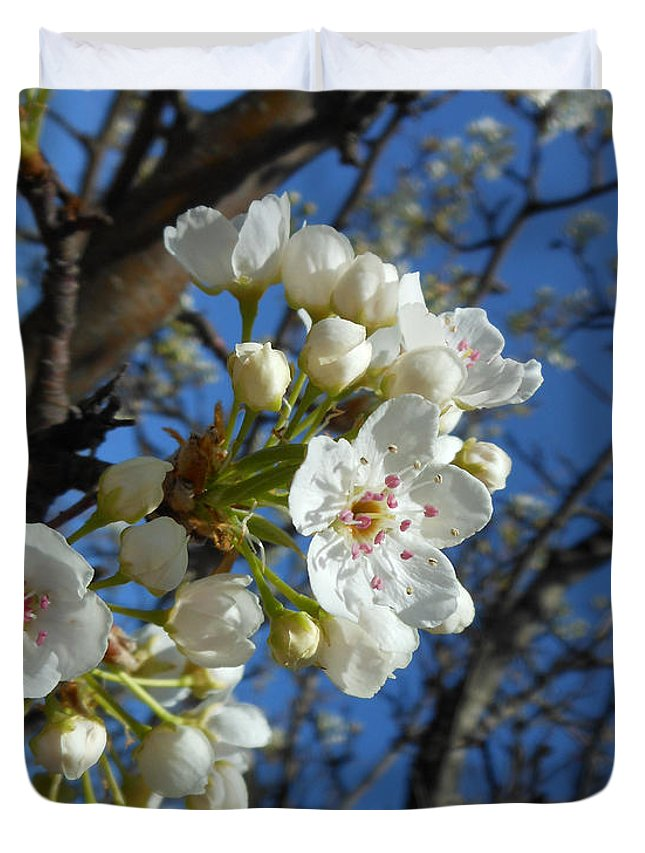 Pear Blossom Tree Duvet Cover featuring the photograph White Blossoms Blooming by Kristin Aquariann