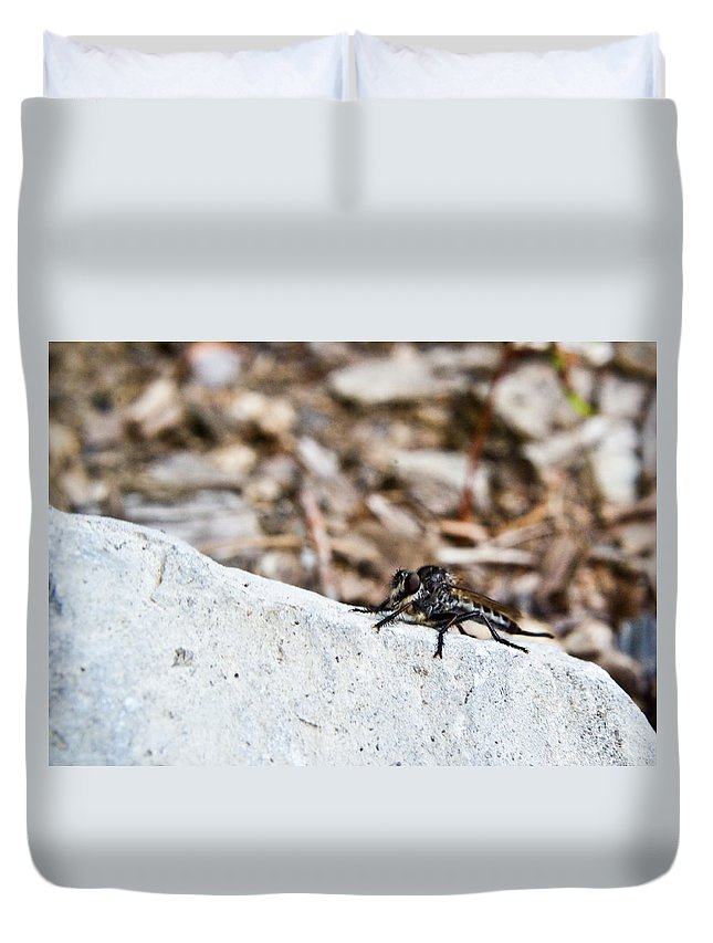 Resting Duvet Cover featuring the photograph Asilid Resting by Douglas Barnett