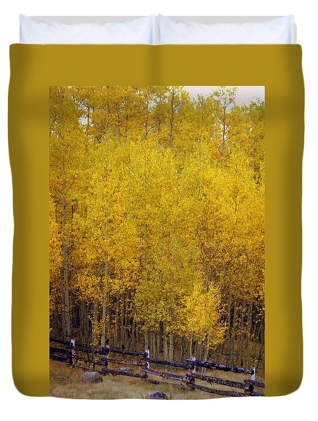 Fall Colors Duvet Cover featuring the photograph Aspen Fall 2 by Marty Koch