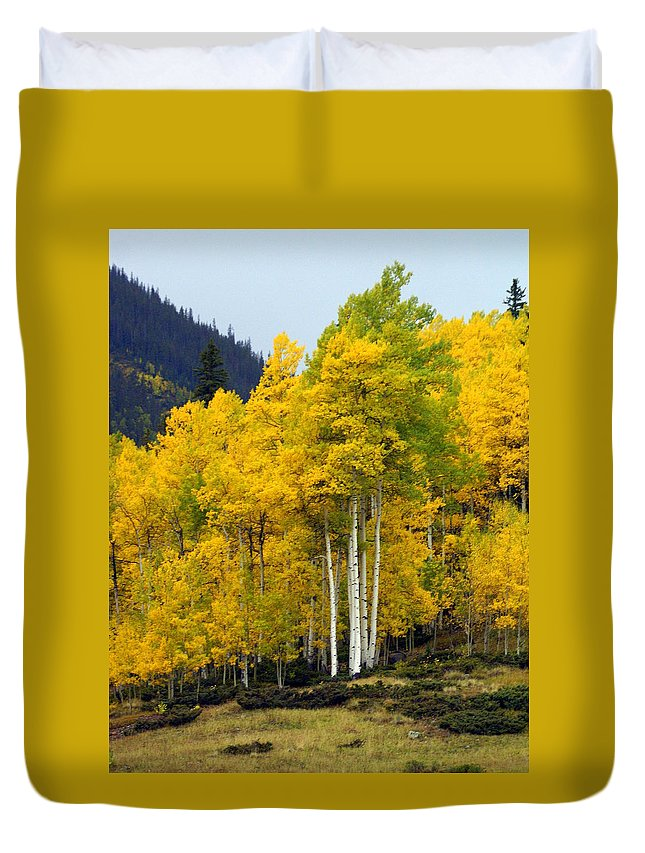 Fall Colors Duvet Cover featuring the photograph Aspen Fall 3 by Marty Koch