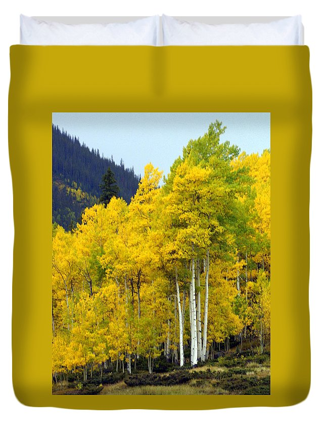 Fall Colors Duvet Cover featuring the photograph Aspen Fall by Marty Koch