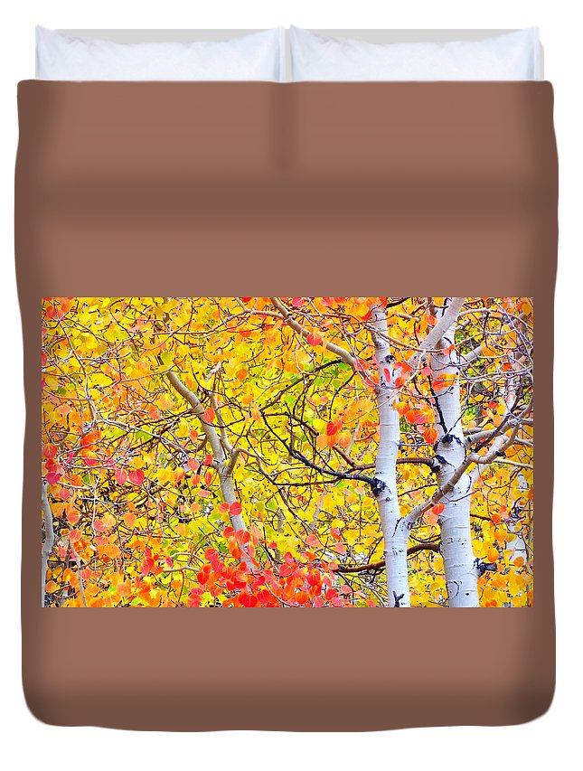 Nature Duvet Cover featuring the photograph Aspen Gold And Orange by Marilyn Diaz