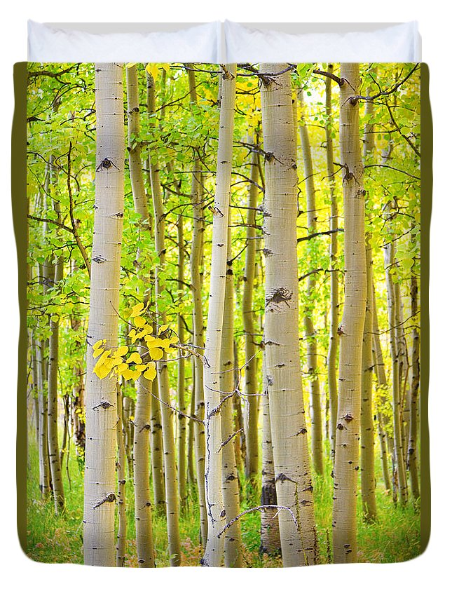 Aspens Duvet Cover featuring the photograph Aspen Tree Forest Autumn Time Portrait by James BO Insogna