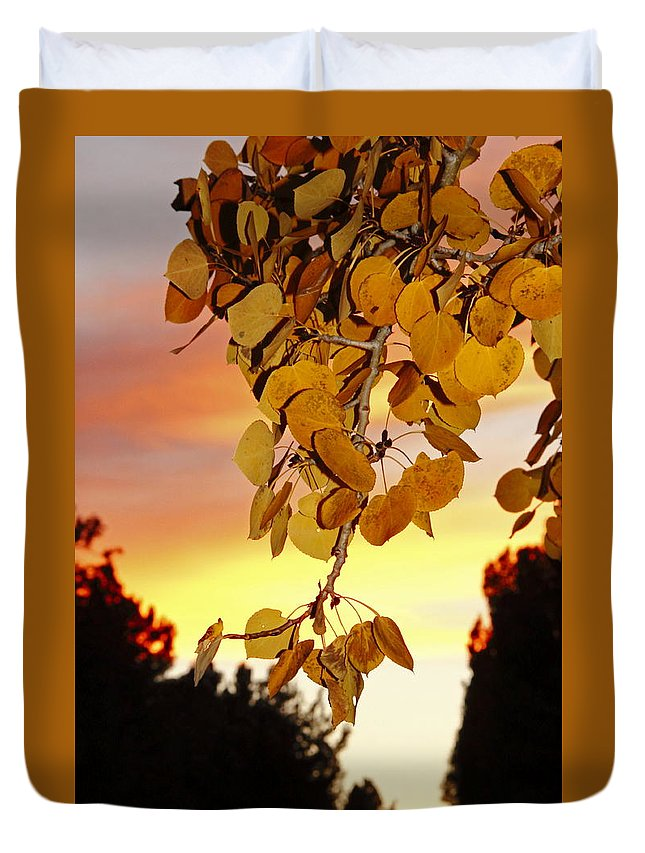 Aspens Duvet Cover featuring the photograph Aspens At Sunset by Diane Zucker