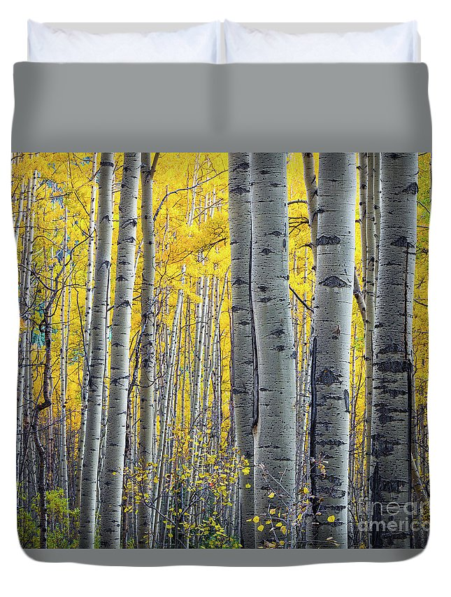 America Duvet Cover featuring the photograph Aspens by Inge Johnsson