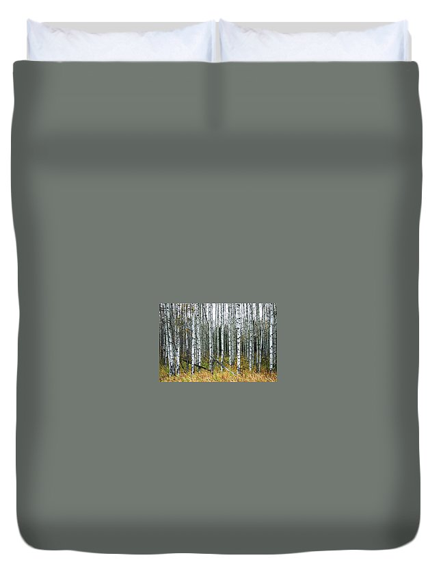Aspens Duvet Cover featuring the photograph Aspens by Nelson Strong