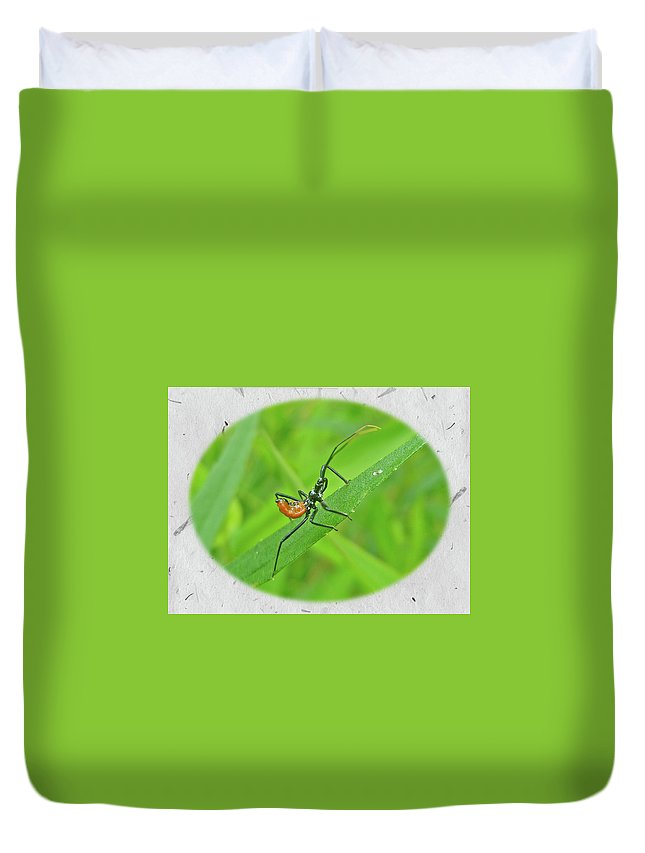 Assassin Duvet Cover featuring the photograph Assassin Bug Nymph - Reduviidae by Mother Nature