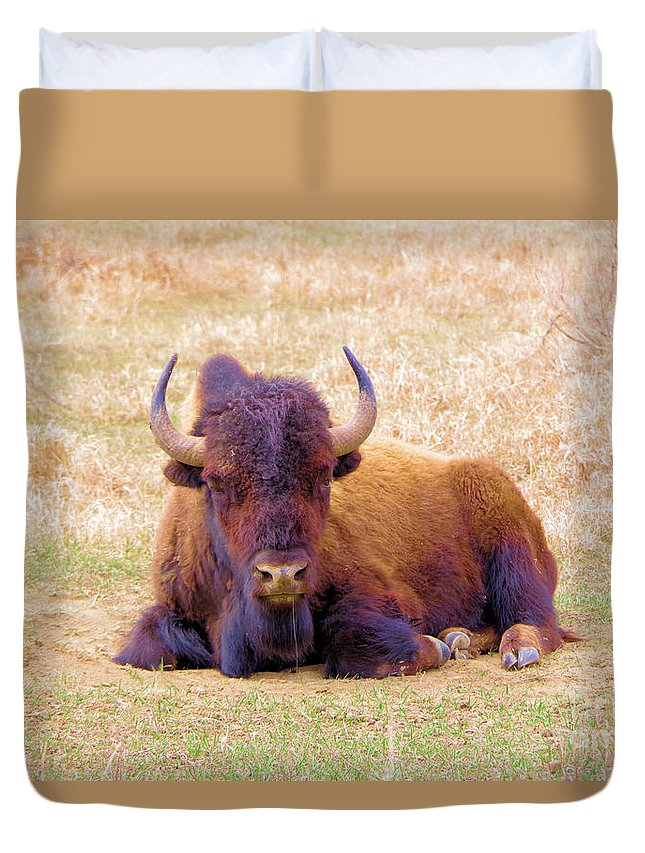 Buffalo Duvet Cover featuring the photograph A Buffalo Staring by Jeff Swan