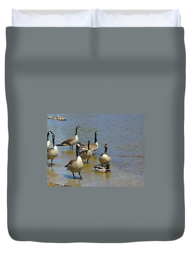 Geese Duvet Cover featuring the photograph At Home In A Crowd by Peggy King