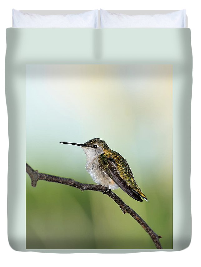 Ruby-throated Hummingbird Duvet Cover featuring the photograph At Rest 2 by Betty LaRue