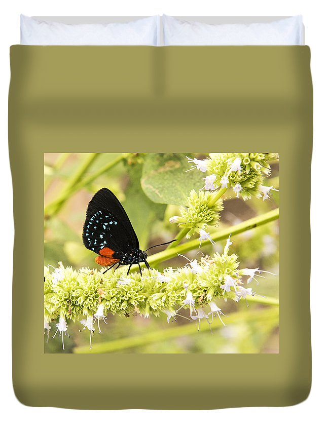 Butterfly Duvet Cover featuring the photograph Atala by Sharon Haeger