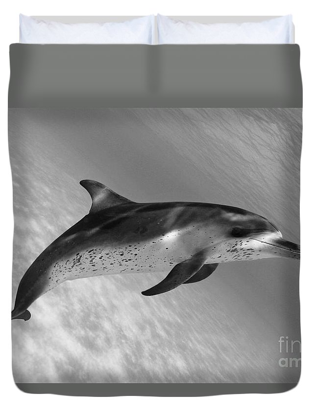 Affirm Duvet Cover featuring the photograph Atlantic Spotted Dolphin by Dave Fleetham - Printscapes