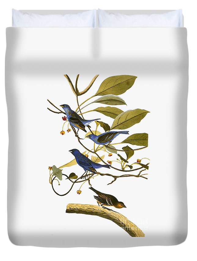 1827 Duvet Cover featuring the photograph Audubon: Bunting, 1827-38 by Granger
