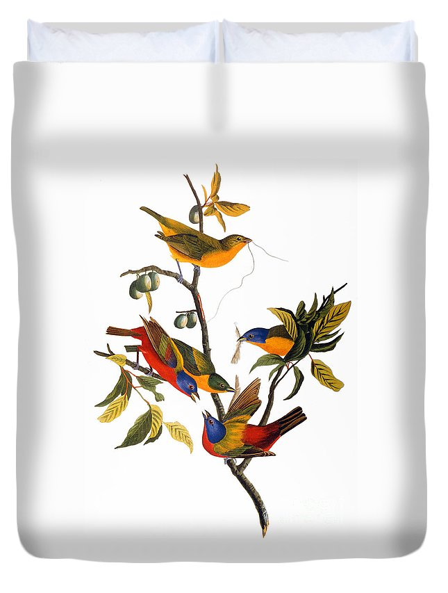 1827 Duvet Cover featuring the photograph Bunting, 1827 by John James Audubon