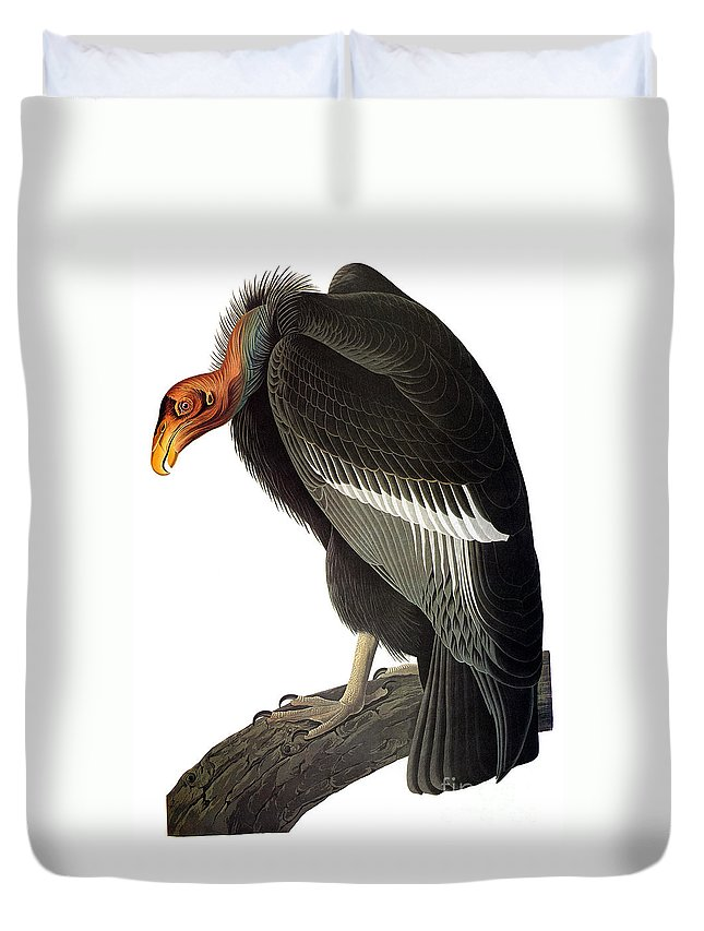 1827 Duvet Cover featuring the photograph Audubon: Condor by Granger