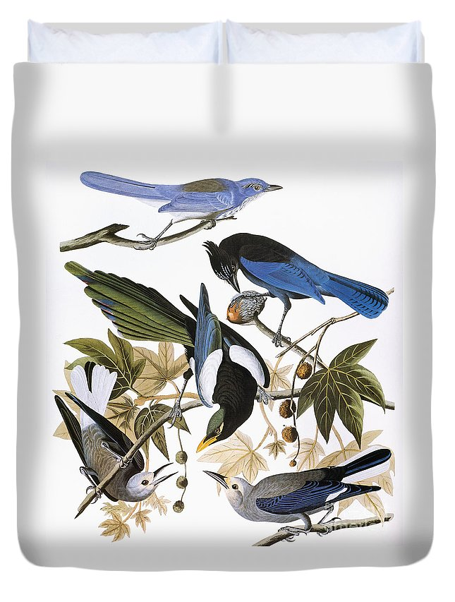 1838 Duvet Cover featuring the photograph Audubon: Jay And Magpie by Granger