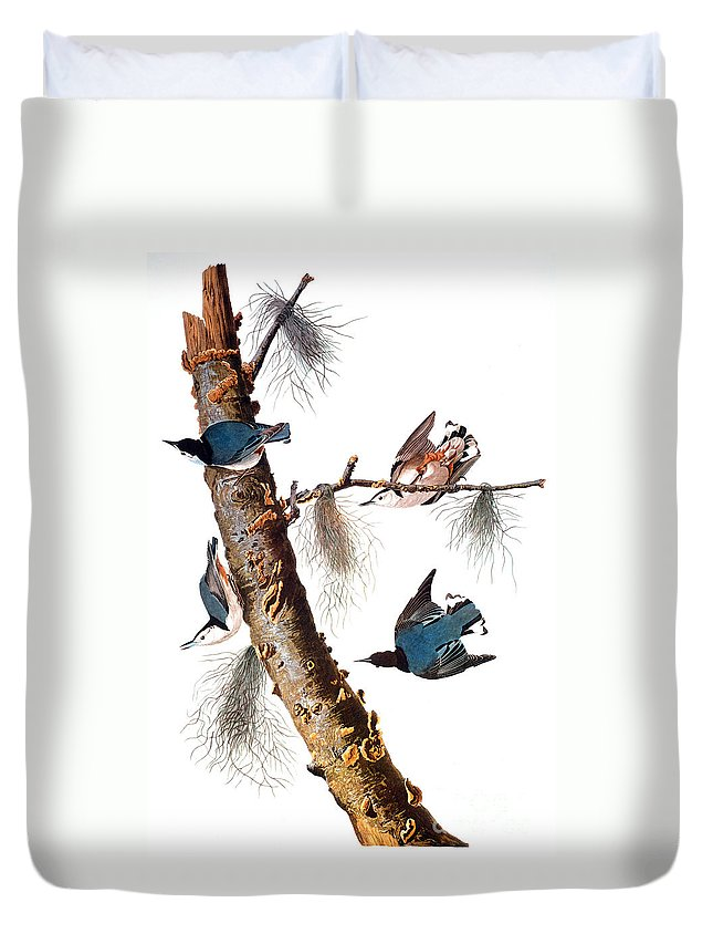 1838 Duvet Cover featuring the photograph Audubon: Nuthatch by Granger