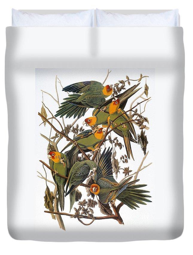 American Duvet Cover featuring the photograph Audubon: Parakeet by Granger