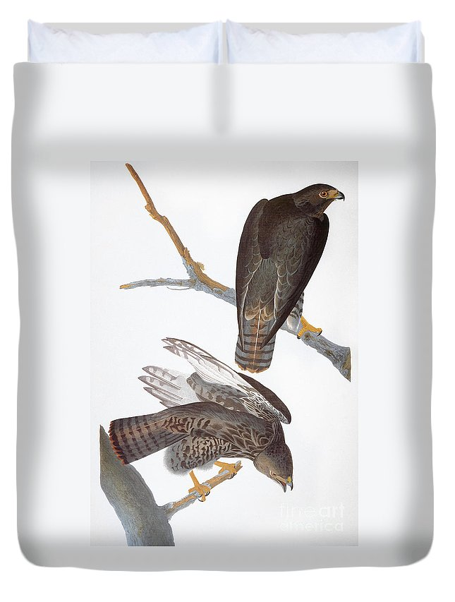 1827 Duvet Cover featuring the photograph Audubon: Red-tailed Hawk by Granger