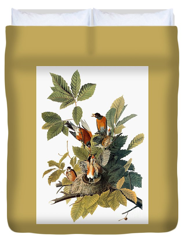 1838 Duvet Cover featuring the photograph Audubon: Robin by Granger