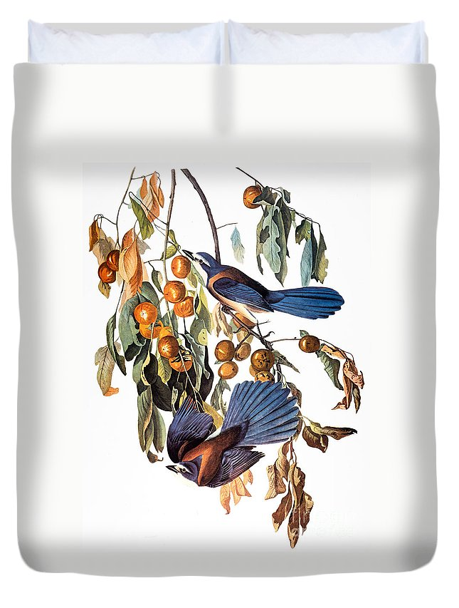 1827 Duvet Cover featuring the photograph Audubon: Scrub Jay, 1827-38 by Granger