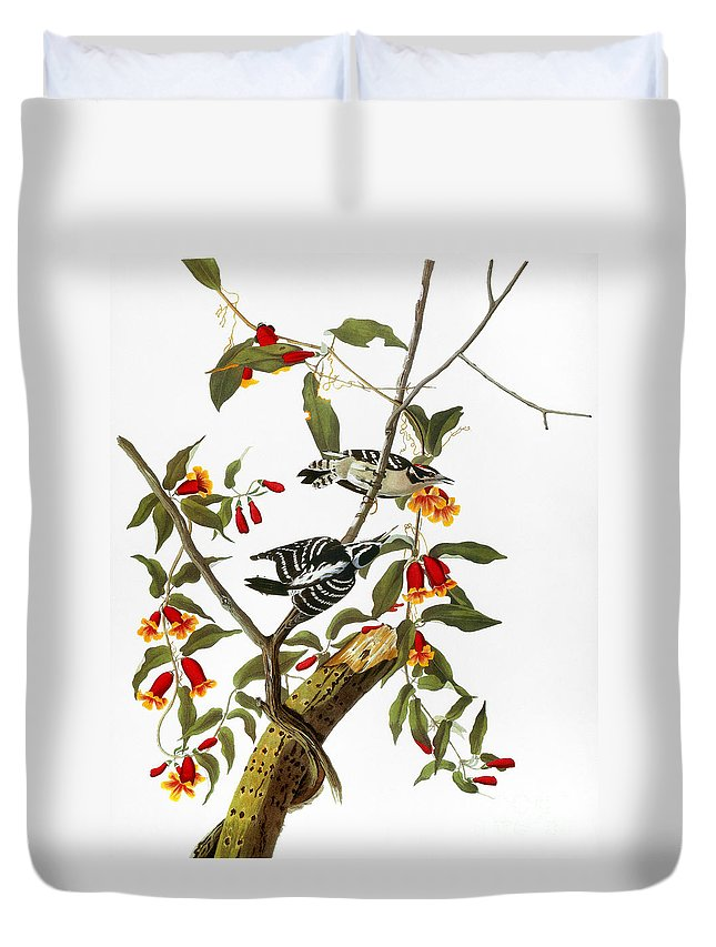 1827 Duvet Cover featuring the photograph Audubon: Woodpecker, 1827 by Granger