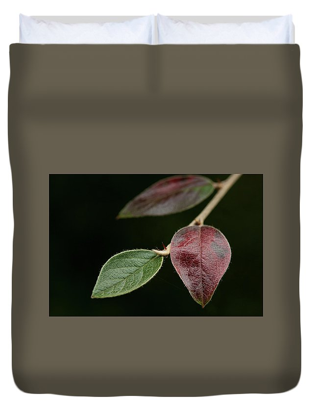 Fine Art Duvet Cover featuring the photograph Autumn Change by Photopoint Art