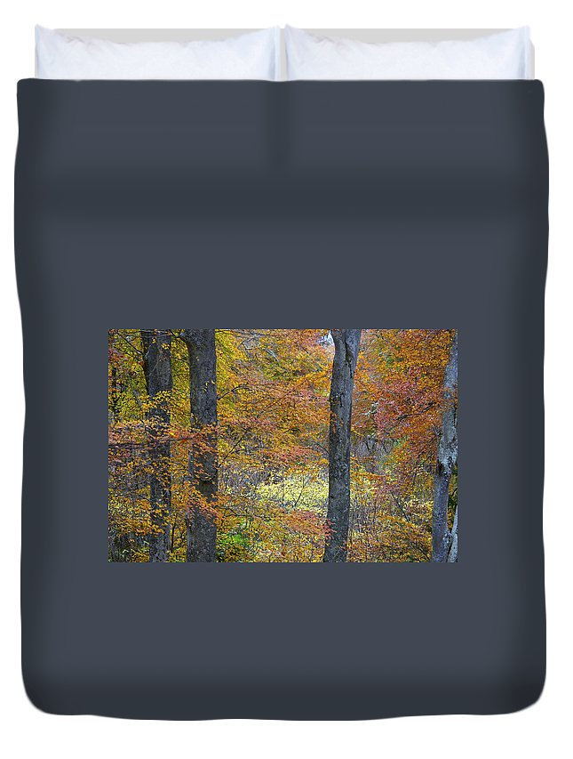 Fall Duvet Cover featuring the photograph Autumn Colours by Phil Crean
