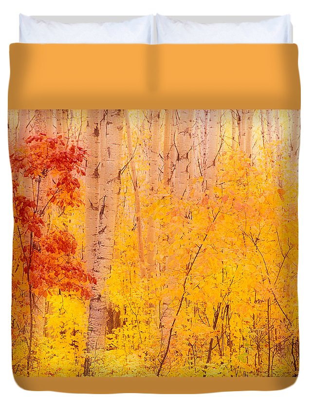 Photography Duvet Cover featuring the photograph Autumn Forest Wbirch Trees Canada by Panoramic Images
