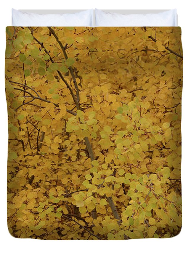 Autumn Duvet Cover featuring the photograph Autumn Gold by Whispering Peaks Photography