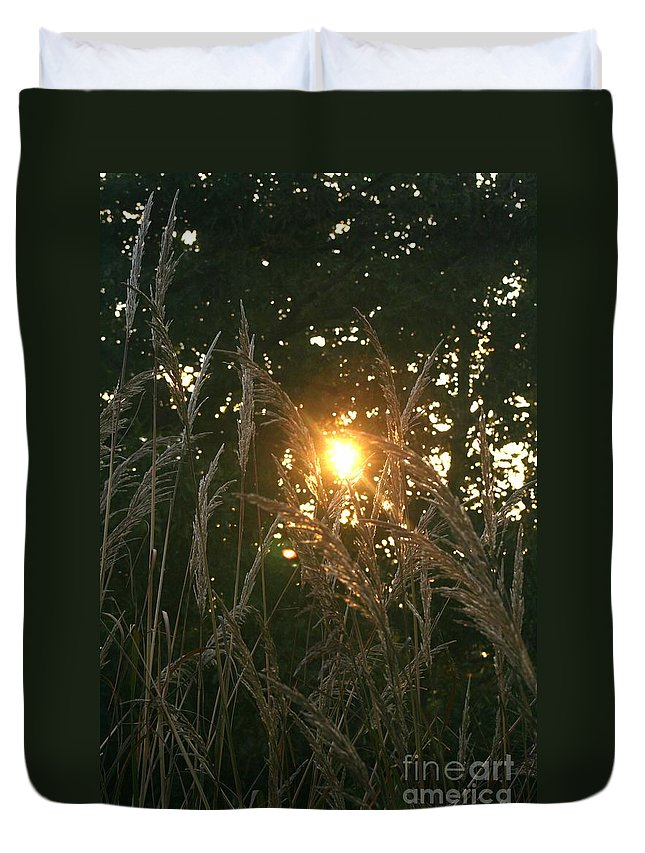 Light Duvet Cover featuring the photograph Autumn Grasses In The Morning by Nadine Rippelmeyer
