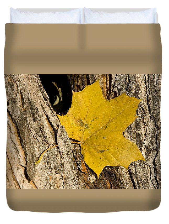 Maple Duvet Cover featuring the photograph Autumn Leaf by James BO Insogna
