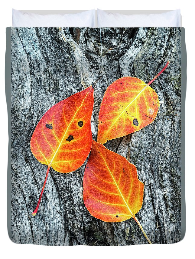 Autumn Leaves Duvet Cover featuring the photograph Autumn Leaves On Tree Bark by Vishwanath Bhat