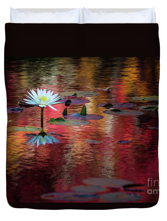 Water Lily Duvet Cover featuring the photograph Autumn Lily by Doug Sturgess