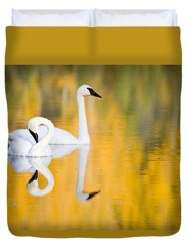 Alaska Duvet Cover featuring the photograph Autumn Reflections by Eggers Photography
