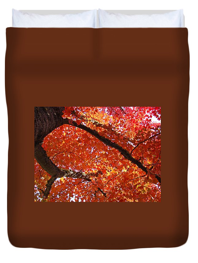 Nature Duvet Cover featuring the photograph Autumn Tree Art Prints Orange Red Leaves Baslee Troutman by Baslee Troutman