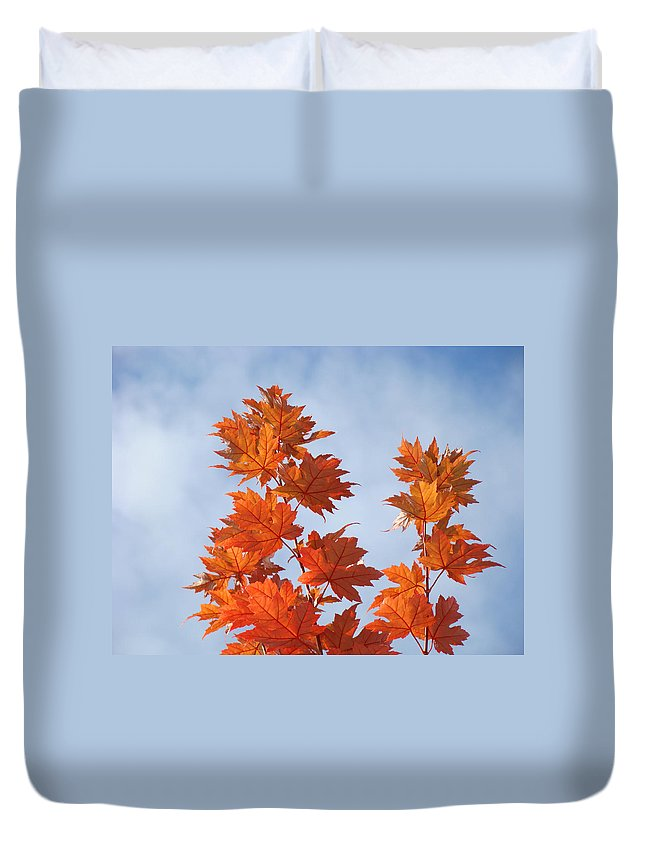 Autumn Duvet Cover featuring the photograph Autumn Tree Leaves Art Prints Blue Sky White Clouds by Baslee Troutman