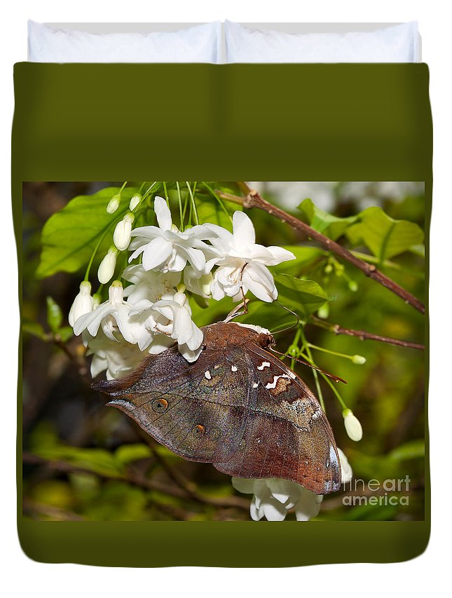 Butterfly Duvet Cover featuring the photograph Autumnleaf Butterfly by Louise Heusinkveld