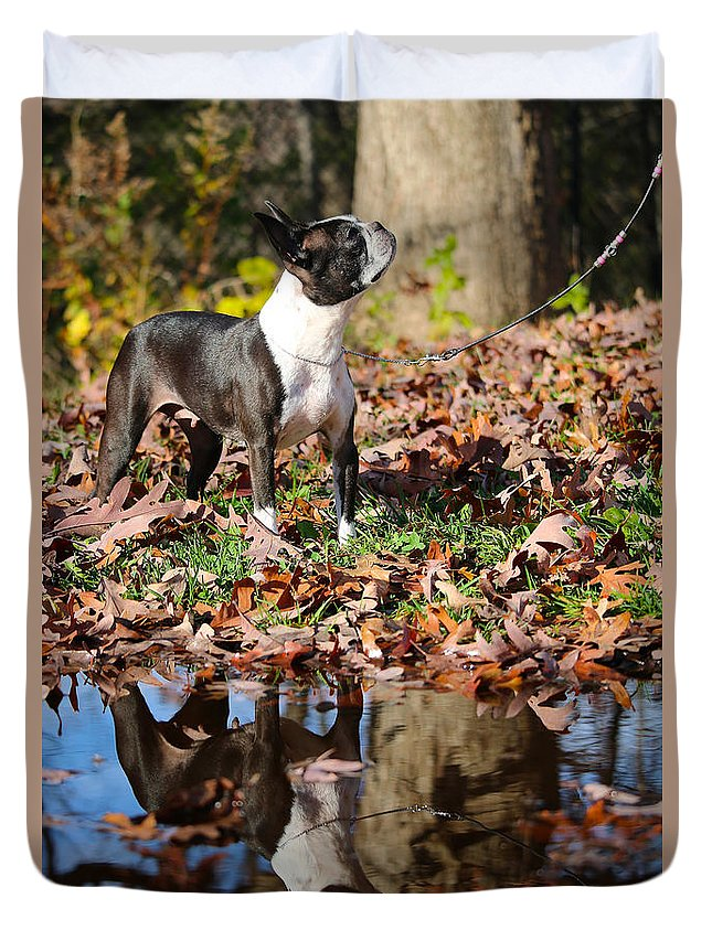 Animal Duvet Cover featuring the photograph Autumn's Reflection by Susan Herber