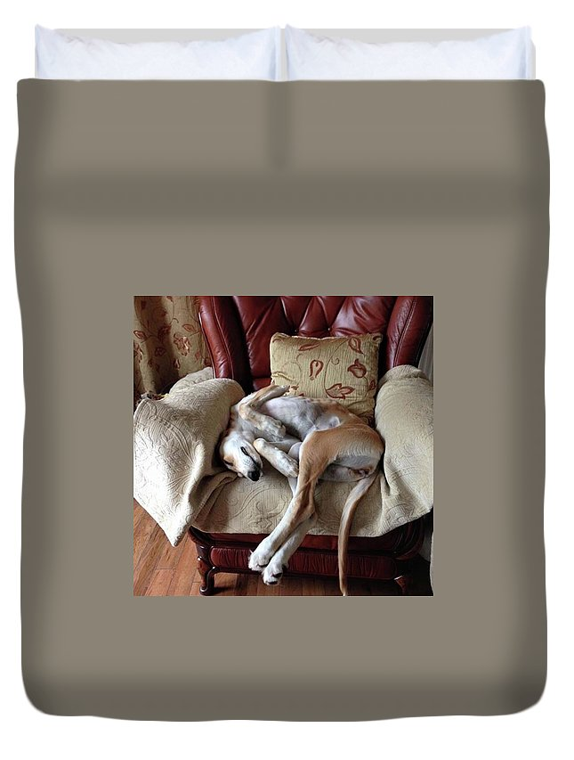 Persiangreyhound Duvet Cover featuring the photograph Ava - Asleep On Her Favourite Chair by John Edwards